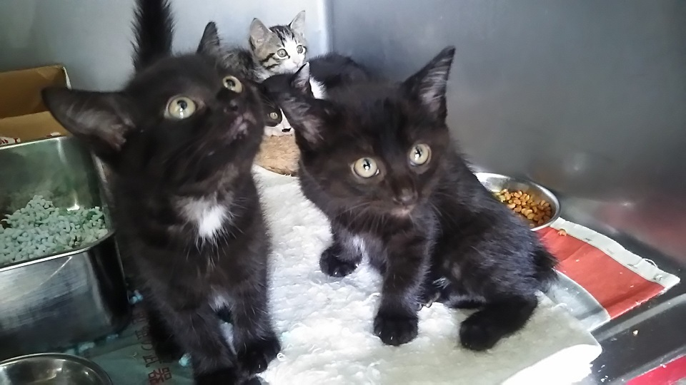 【移動先募集】センター(支所)収容の子猫・成猫(6/10訪問)_f0242002_19561714.jpg
