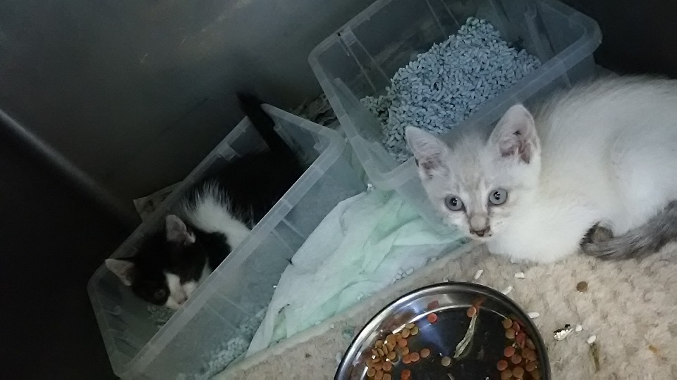【移動先募集】センター(支所)収容の子猫・成猫(6/10訪問)_f0242002_20053937.jpg