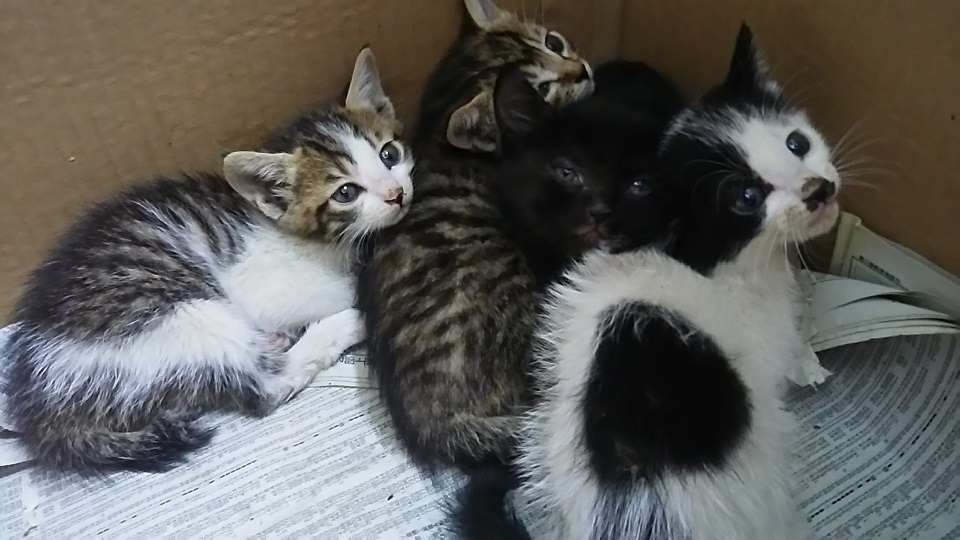 【移動先募集】センター(支所)収容の子猫・成猫(6/10訪問)_f0242002_20211764.jpg