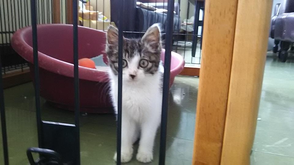 【移動先募集】センター(支所)収容の子猫・成猫(6/10訪問)_f0242002_20271548.jpg