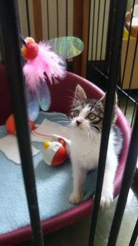 【移動先募集】センター(支所)収容の子猫・成猫(6/10訪問)_f0242002_20272251.jpg