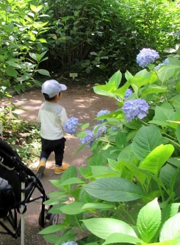 植物園花めぐり1_e0048413_18303102.jpg