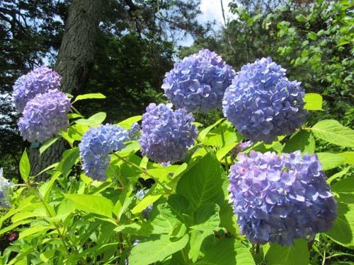 植物園花めぐり1_e0048413_18304525.jpg