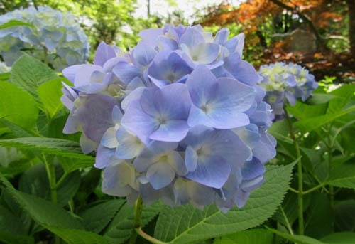 植物園花めぐり1_e0048413_18305258.jpg