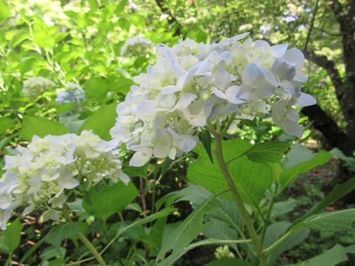植物園花めぐり1_e0048413_18305603.jpg