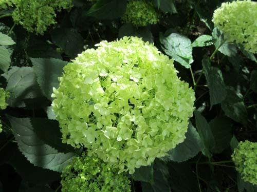植物園花めぐり1_e0048413_18311220.jpg
