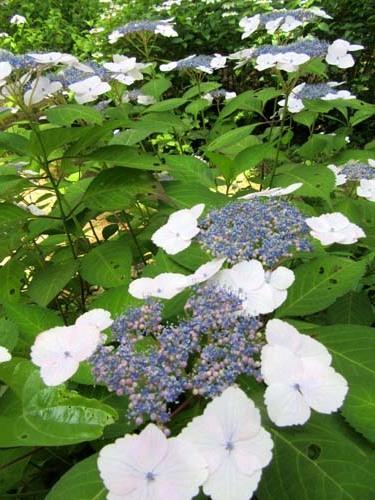 植物園花めぐり1_e0048413_18312719.jpg