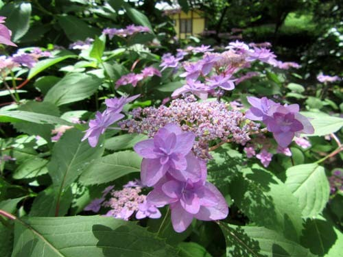 植物園花めぐり1_e0048413_18313113.jpg