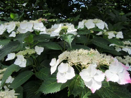 植物園花めぐり1_e0048413_18313641.jpg