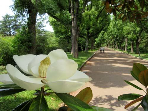 植物園花めぐり2_e0048413_22001801.jpg