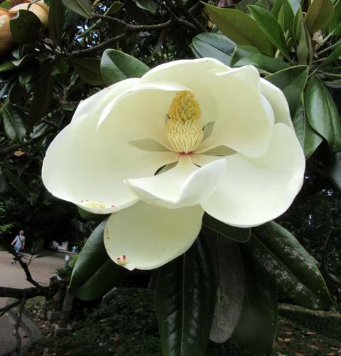 植物園花めぐり2_e0048413_22002666.jpg