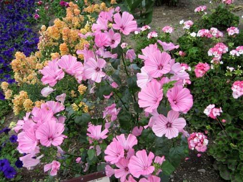 植物園花めぐり2_e0048413_22003482.jpg