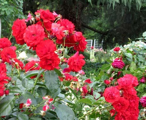 植物園花めぐり2_e0048413_22004657.jpg