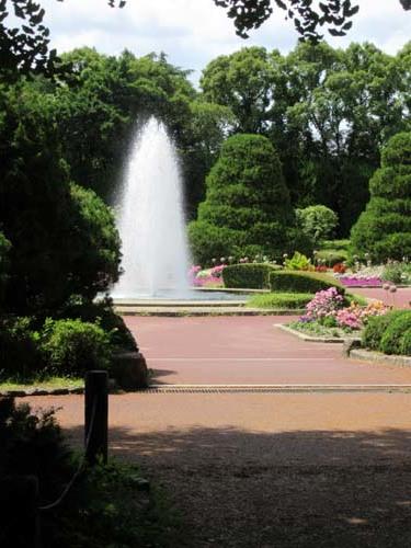 植物園花めぐり2_e0048413_22005309.jpg