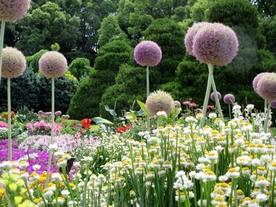 植物園花めぐり2_e0048413_22005944.jpg