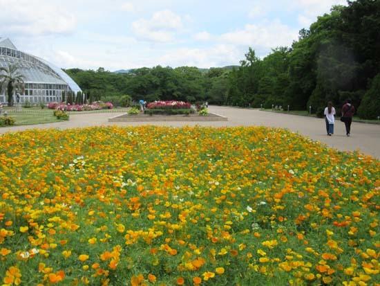 植物園花めぐり2_e0048413_22011023.jpg