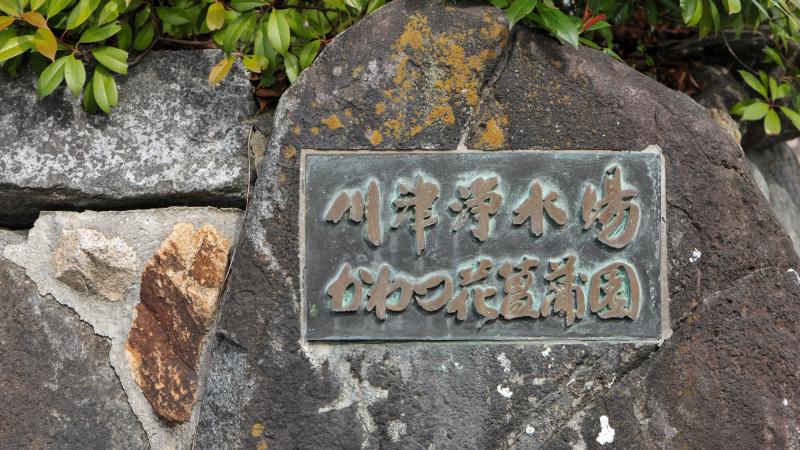 坂出市 かわつ花菖蒲園に 今年も・・・_d0246136_17314455.jpg