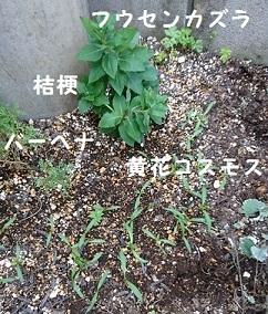 f0087347_20101676.jpg