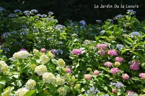 紫陽花に癒されて_f0329586_11563553.jpg