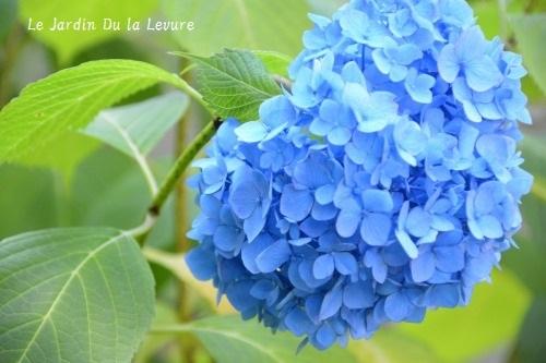 紫陽花に癒されて_f0329586_11580904.jpg