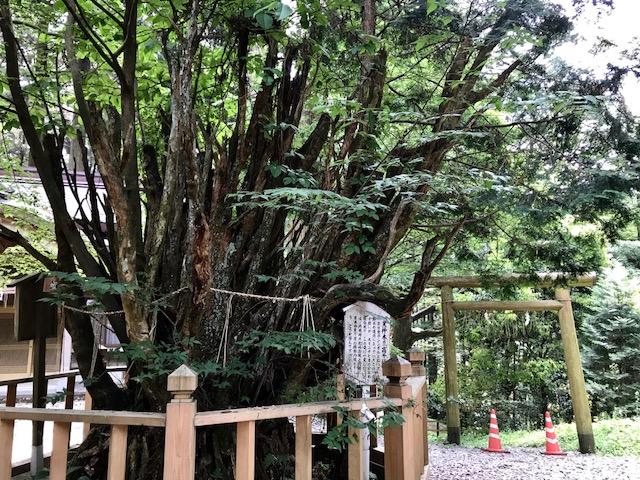宮崎、高千穂~熊本城。神がかりの旅。2/2_a0050302_3291267.jpg