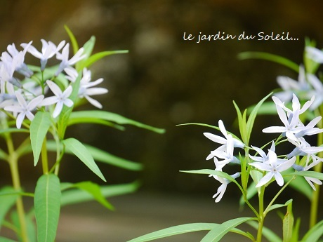 5月の庭の思い出_c0098807_20280789.jpg
