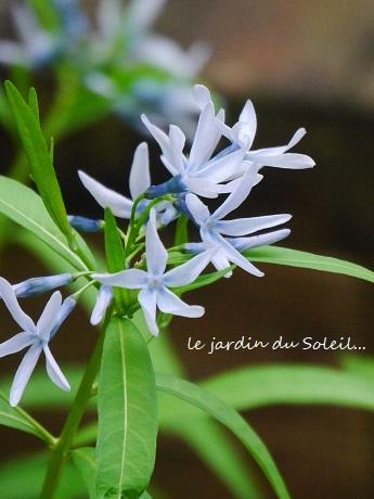 5月の庭の思い出_c0098807_20281570.jpg