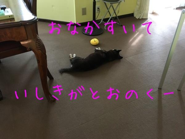 f0369014_19514351.jpg