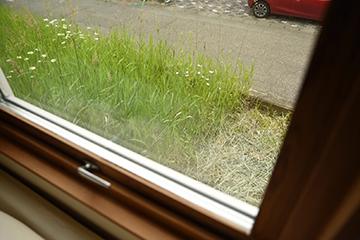 草と種_b0259218_21592255.jpg