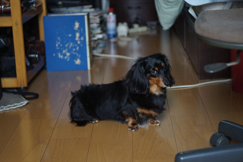 E-Lucky Anastigmat 75mm F3.5 で ミミちゃんを_b0069128_8521874.jpg