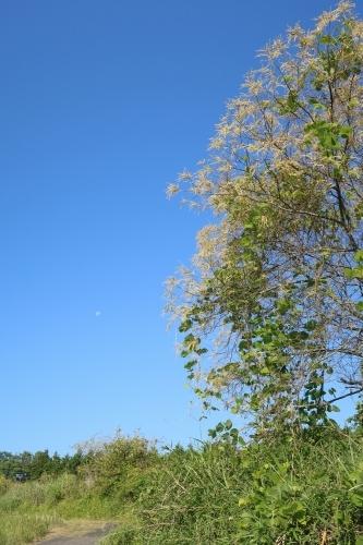 栗の木 雨の日_d0336530_21115793.jpg