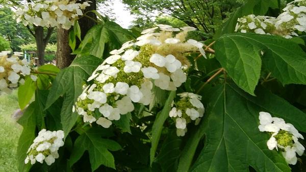 6月の神宮東公園_a0098746_10435539.jpg