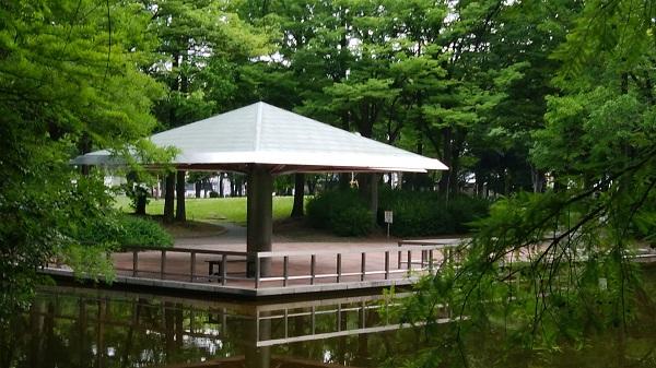 6月の神宮東公園_a0098746_10462927.jpg