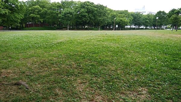 6月の神宮東公園_a0098746_10465492.jpg