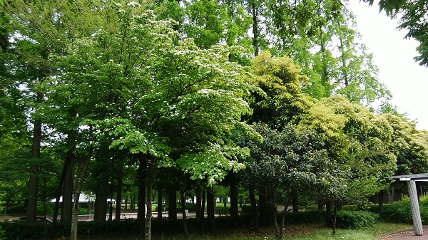 6月の神宮東公園_a0098746_104668.jpg