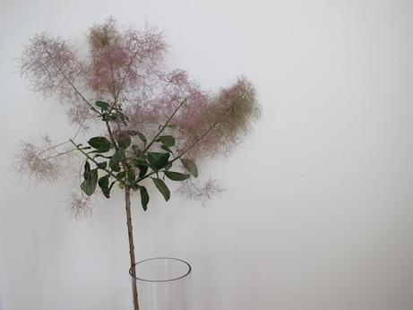 夏の枝ものと、ユニクロでも玉砕した件_d0291758_21224077.jpg