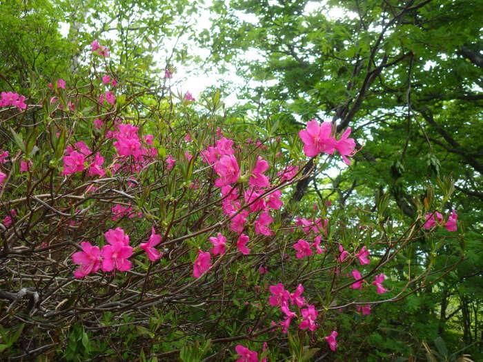 花の不忘山 ~ 2017年6月10日_f0170180_21163400.jpg