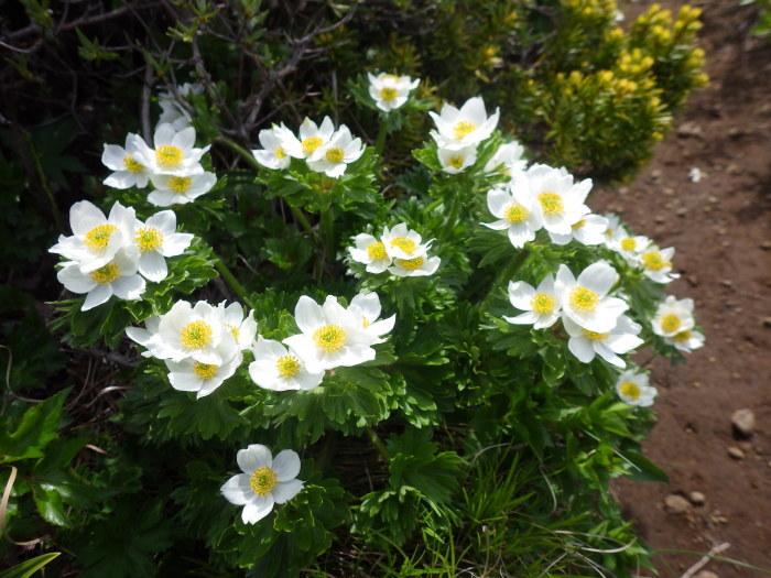 花の不忘山 ~ 2017年6月10日_f0170180_22061756.jpg