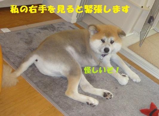 f0121712_23080978.jpg