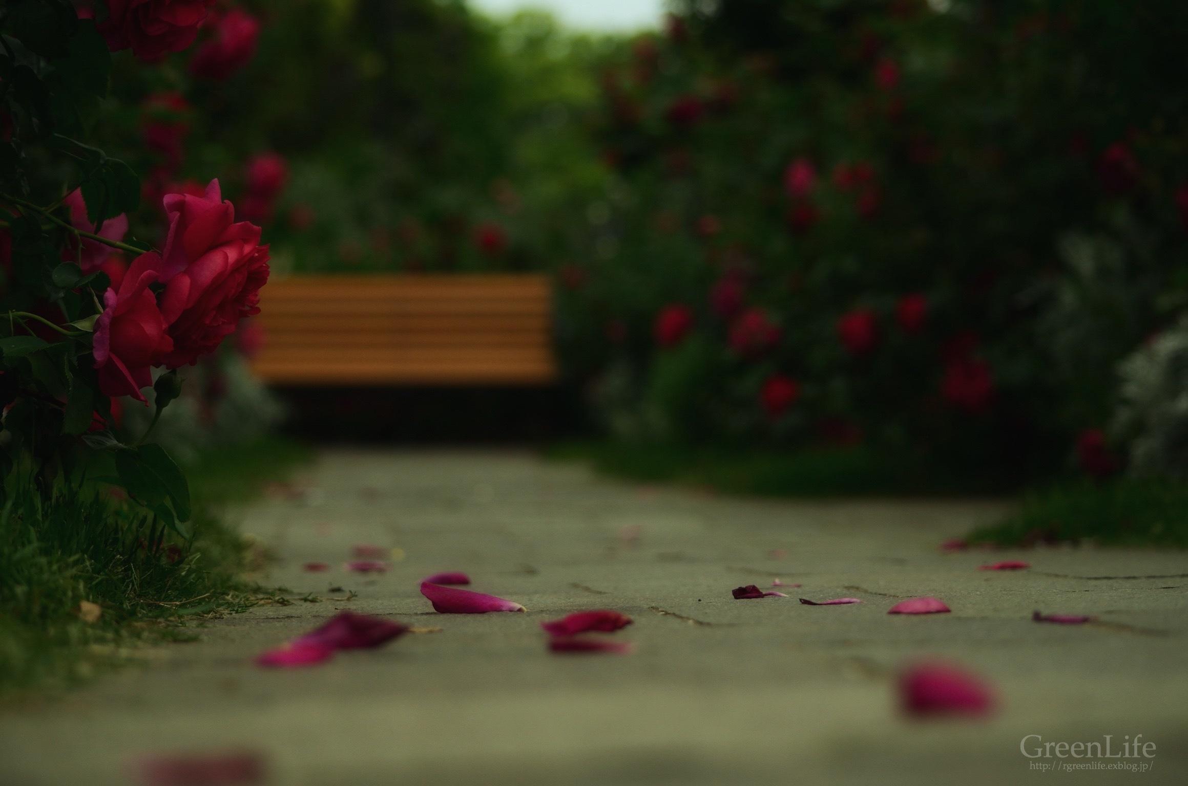 薔薇のテーマ_f0321522_09463965.jpg