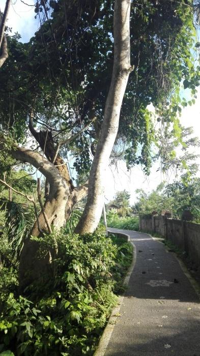 周辺の散歩道_e0155231_22573413.jpg