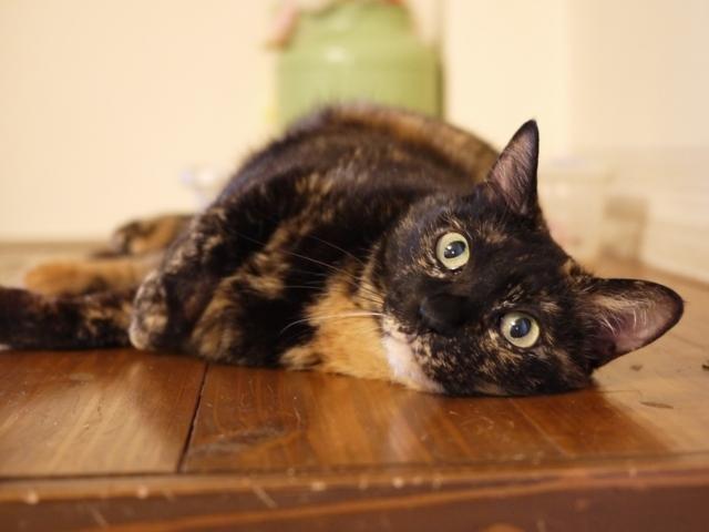 猫のお留守番 ワサビちゃん天ちゃん麦くん茶くん編。_a0143140_22050158.jpg