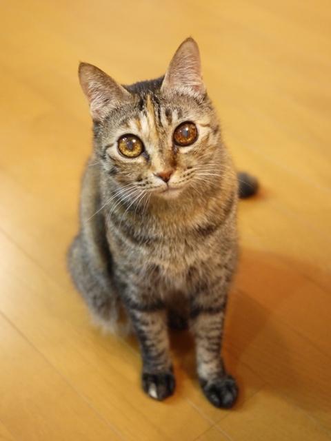 猫のお留守番 ワサビちゃん天ちゃん麦くん茶くん編。_a0143140_22052214.jpg
