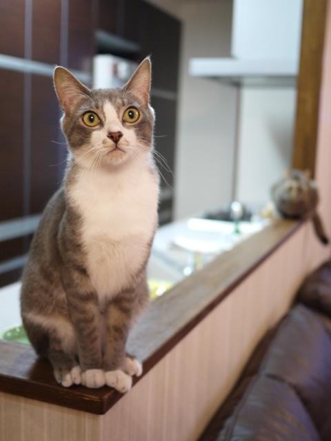 猫のお留守番 ワサビちゃん天ちゃん麦くん茶くん編。_a0143140_22055379.jpg