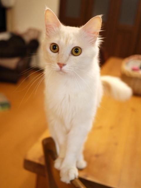 猫のお留守番 ワサビちゃん天ちゃん麦くん茶くん編。_a0143140_22061267.jpg