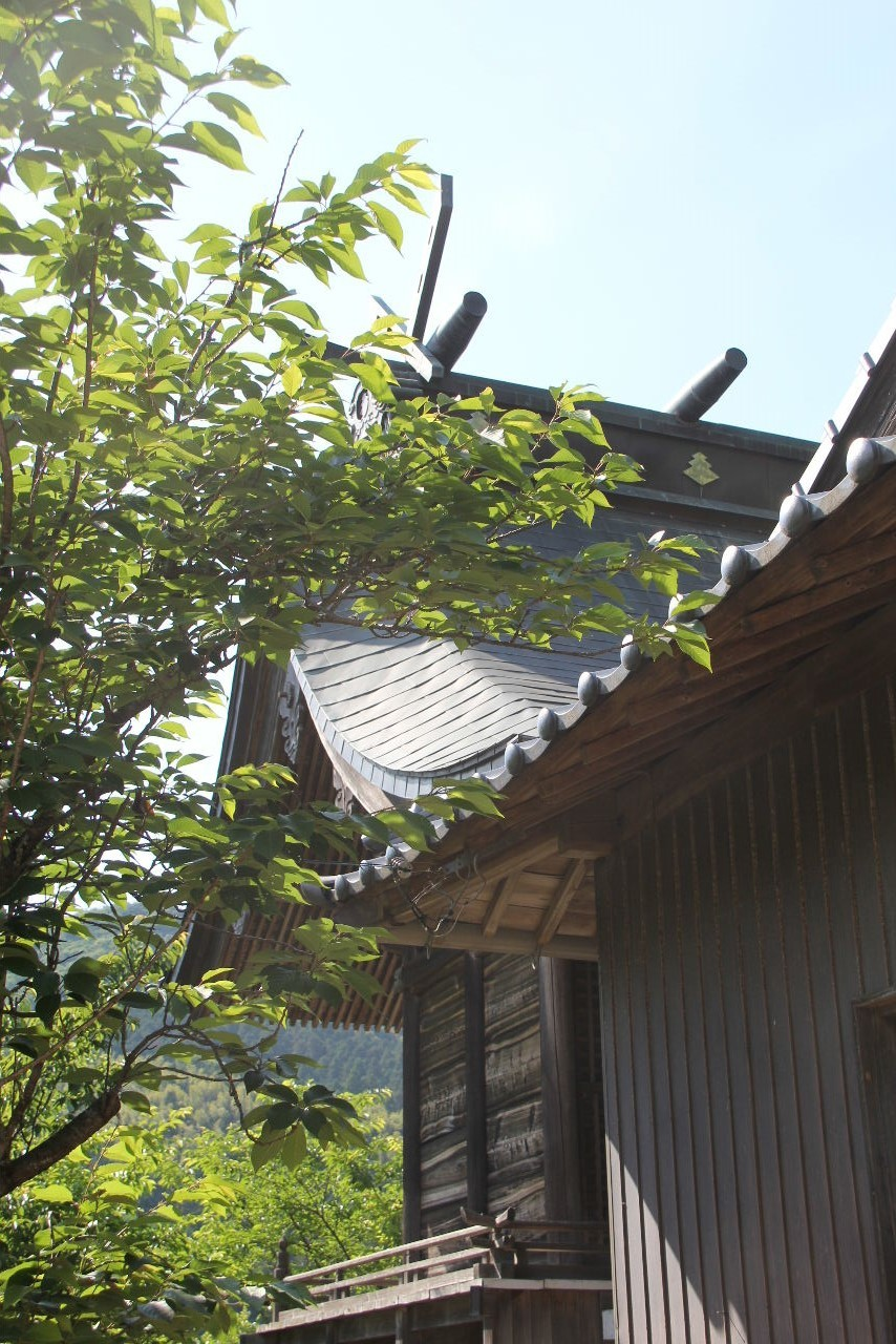 大楠神社と本庄の大楠_c0011649_22410501.jpg