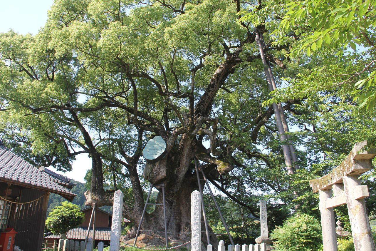 大楠神社と本庄の大楠_c0011649_22415960.jpg