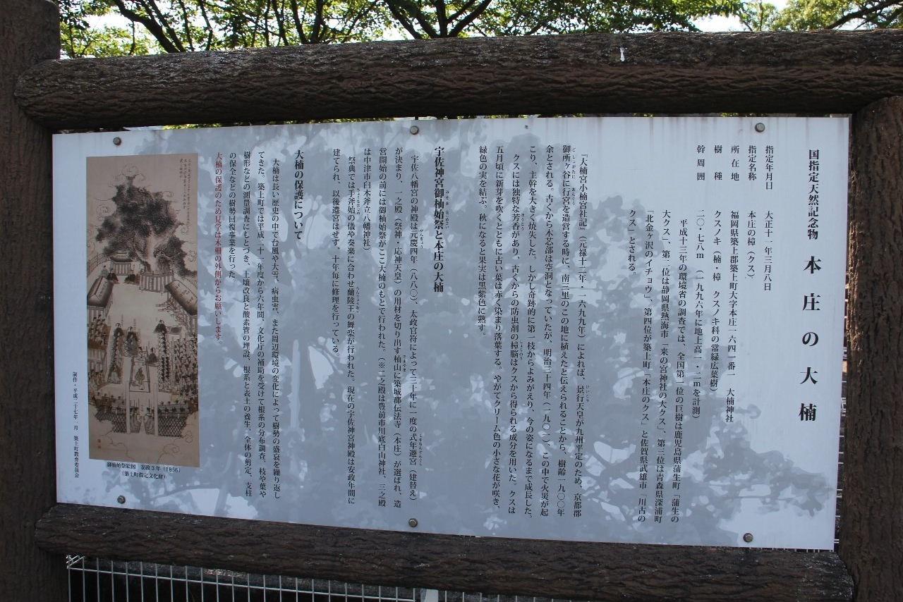 大楠神社と本庄の大楠_c0011649_22442869.jpg