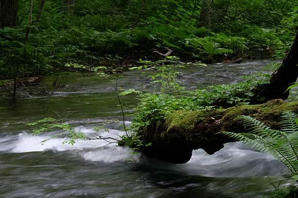 梅雨の溪を行く3題_e0220159_05465151.jpg