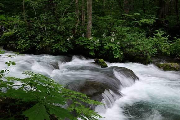 梅雨の溪を行く3題_e0220159_05465893.jpg